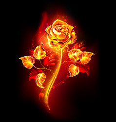 fire rose vector image