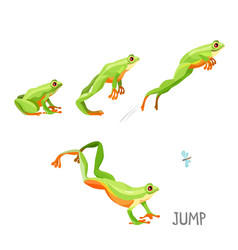 Frog jumping sequence cartoon vector