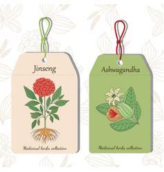 Jinseng i ashwagandha vector