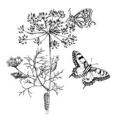 Metamorphosis swallowtail - papilio machaon vector