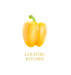 Orange bell pepper vector image