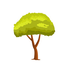 Pine green tree icon vector