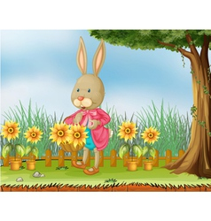 A bunny in the garden with sunflowers vector image vector image