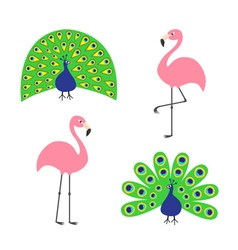Peacock Pink flamingo set Feather out open tail vector image