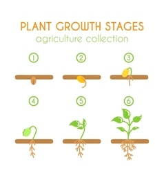 plant growth stages Planting process vector image