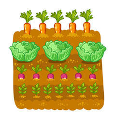 with cabbage and radish vector image
