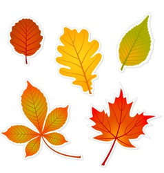 autumn leaves stickers vector image