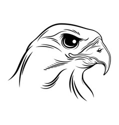 bald eagle on white image vector image