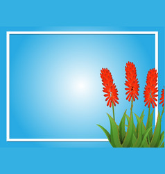 Border template with aloevera flowers vector