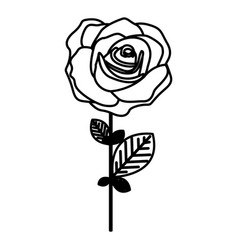 figure rose with oval petals and leaves icon vector image vector image