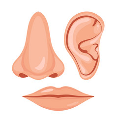 human nose ear vector image