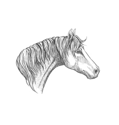 Speedy racehorse of american quarter breed sketch vector