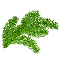 Twig evergreen vector