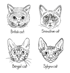 Drawing cats icons vector image