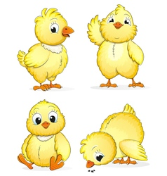 Small fluffy chickens vector image