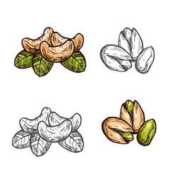 Cashew pistachio nuts fruits sketch icons vector