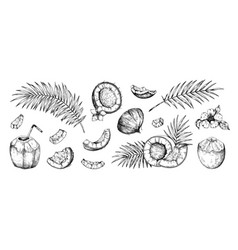 coconut sketch hand drawn palm leaves and coco vector image
