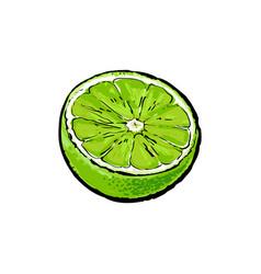 Half ripe green lime sketch vector