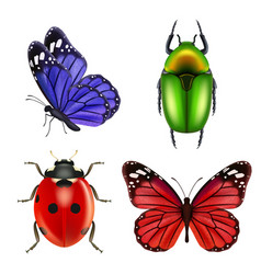 realistic insects butterfly bugs ladybird ant vector image