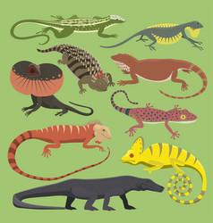 Reptyle lizard reptile isolated vector