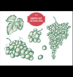 collection of hand drawn pastel grapes vector image