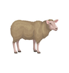 Detailed flat icon of young sheep domestic vector