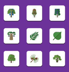 Flat icon nature set of hickory baobab wood and vector