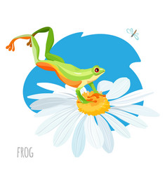 frog jumping on chamomile flower sketch vector image