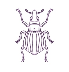 Outline Beetle Bug Insect vector image