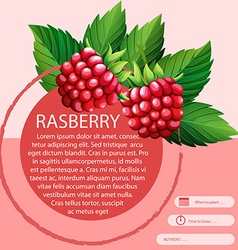 Rasberry and text design vector