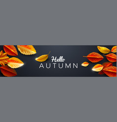 autumn season background decorate with leaves vector image