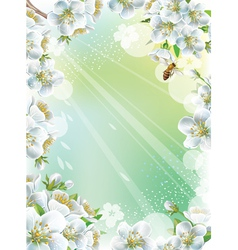 Frame with cherry blossom vector