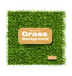 grass background realistic layout template vector image