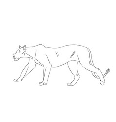 Lioness with lines sketch vector