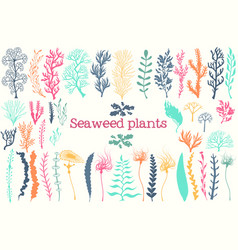 Sea plants and aquarium seaweed set vector