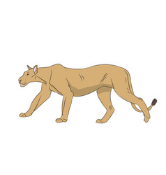 lioness color vector image vector image