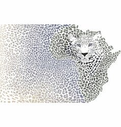 African leopard - background continent map vector