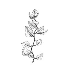 Birch tree branch contour line vector