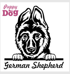 Puppy german shepherd - peeking dogs - breed face vector