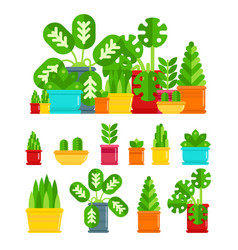 set of house plants colourful plants isolated vector image vector image