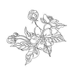 apple flowers sketch vector image
