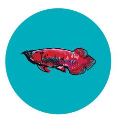 Arowana fish on white background vector