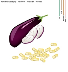Eggplant with Vitamin B5 B6 and B9 vector