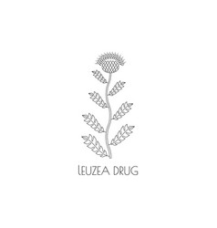 Leuzea drug line icon vector