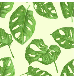 seamless texture tropical plant sheet of monstera vector image