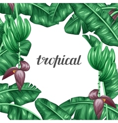 Background with banana leaves Decorative image of vector image