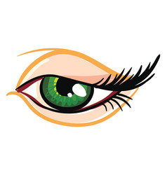 Beautiful green female eye vector