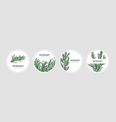 Collection of round labels decorated with rosemary vector