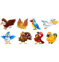 different types birds vector image