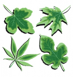 green leaves collection vector image